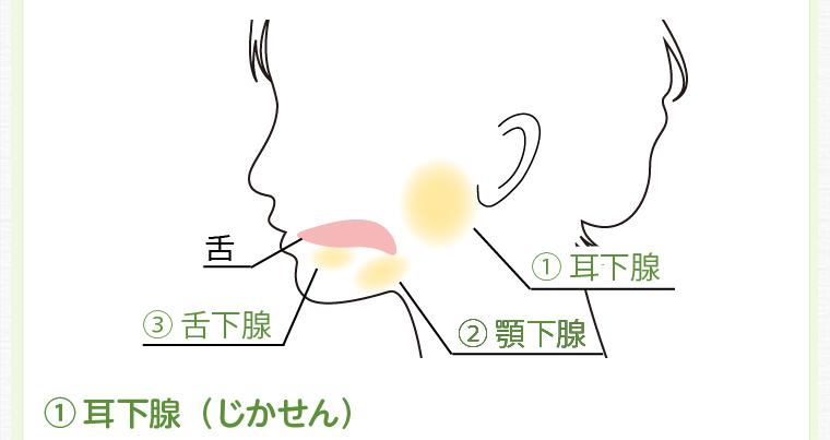 耳下腺(じかせん)